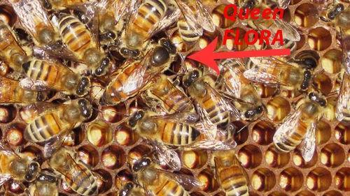 Queen bee Flora