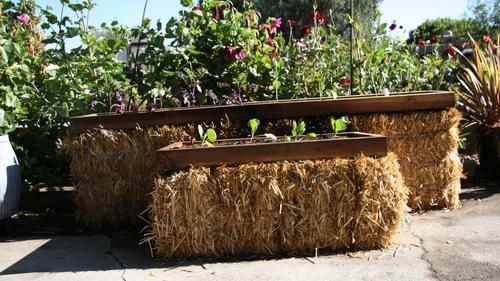 Building a straw bale garden