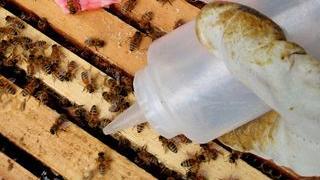 Varroa mite treatments and experiments