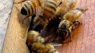 Report from the hives