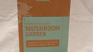 Grow mushrooms in coffee grounds