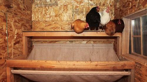 An inspiringly clean chicken coop - Sunset Magazine
