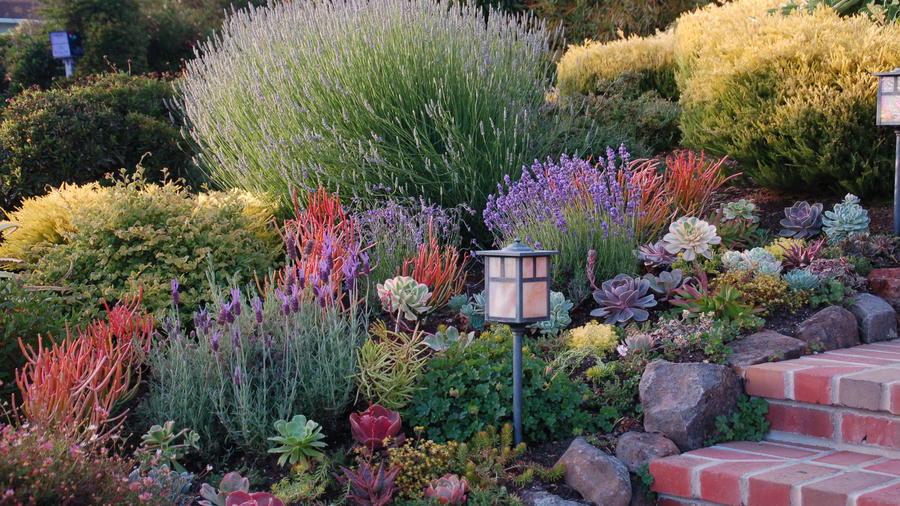 A Mediterannean Garden U2013 St. John