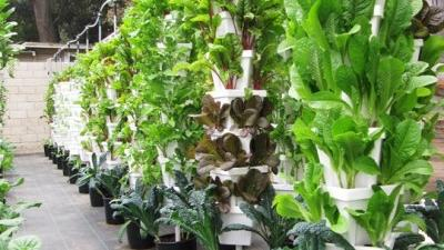 Algeria Fresh vertical farm