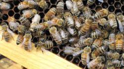 The bee paradigm