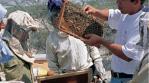 The sweet gift of honey bees