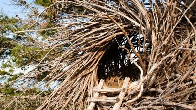 The Human Nest at Treebones Resort in Big Sur, CA.