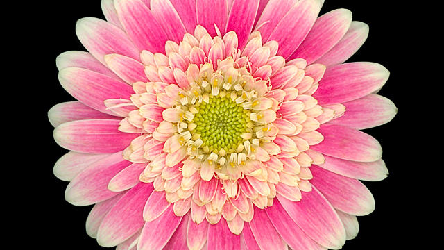 Blush_David Leaser low res 640 x 640
