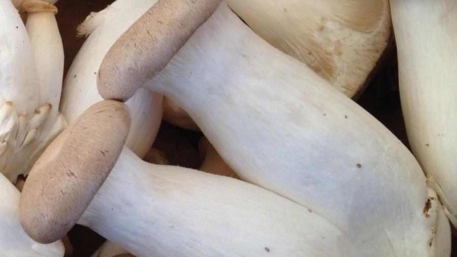 Trumpet mushrooms. (Photograph by Margo True)