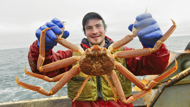 Dungeness crab update: The latest on the supply situation