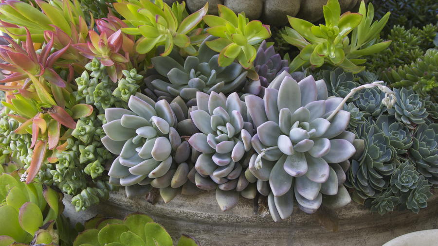 7 Reasons To Grow Succulents In The Drought Sunset Magazine