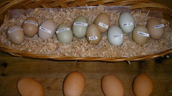 An Eggstraordinarily Sentimental Souvenir