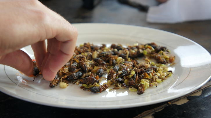 Plate of insects ready to eat. (Nigel Killeen/Getty Images)