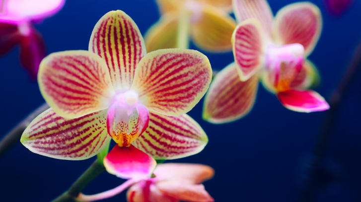 5 Ways To Keep Your Orchid Alive Sunset Magazine