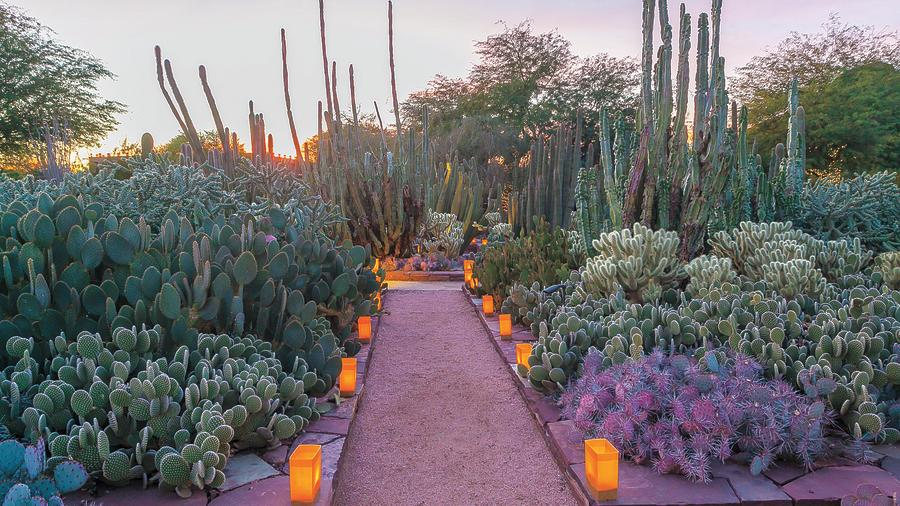 Image courtesy of the Desert Botanical Garden