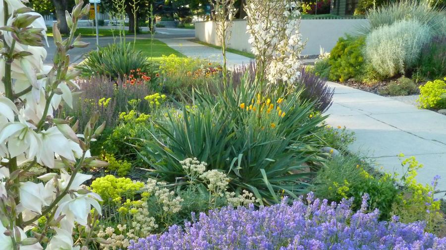 8 Easy Care Plants For Parking Strip Gardens Sunset Magazine