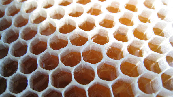 The beauty of uncapped honeycomb from our beehives