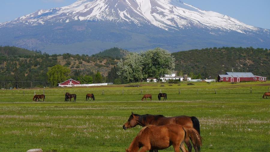 horses with shasta