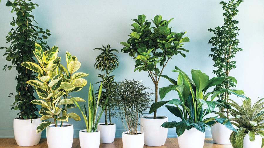House plants3