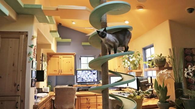 Cat Friendly Home Design on copy cat chic nursery room design, cat shelves, cat bathroom accessories, cat room house design, cat condo from old dresser, cat house home design, cat staircase design, cat chair, cat wall walks designs, cat interior design, cat from home, cat stairs, cats in the kitchen design,