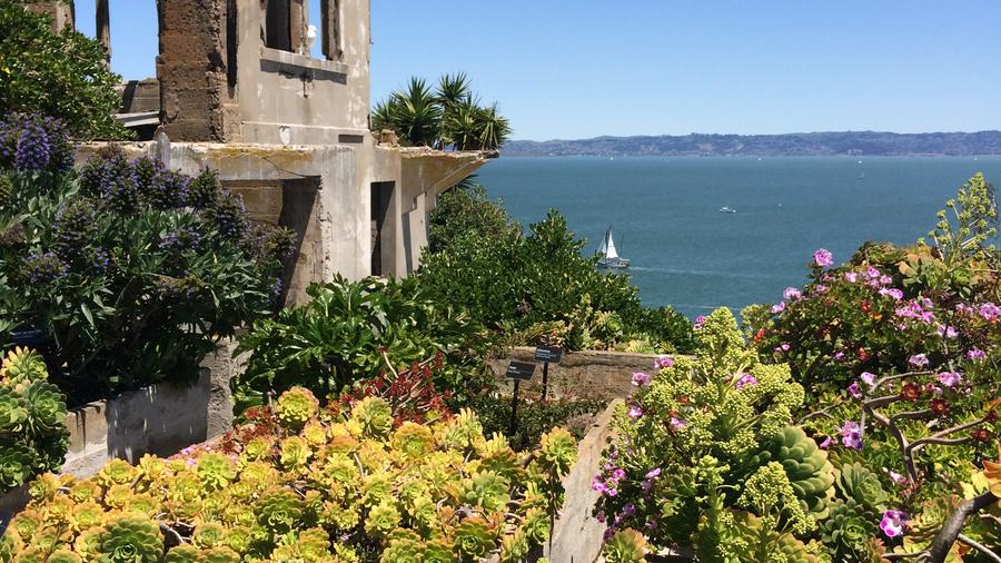 The gardens of Alcatraz are a year-round reason to visit.  (Photo by Andrea Minarcek.)