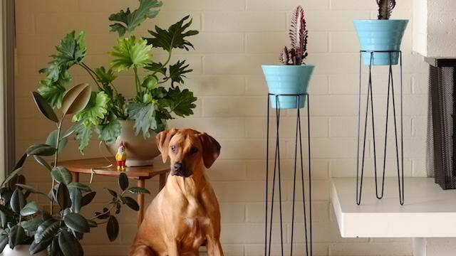 Twiggy Plant Stands with Vida, our Marketing Mascot