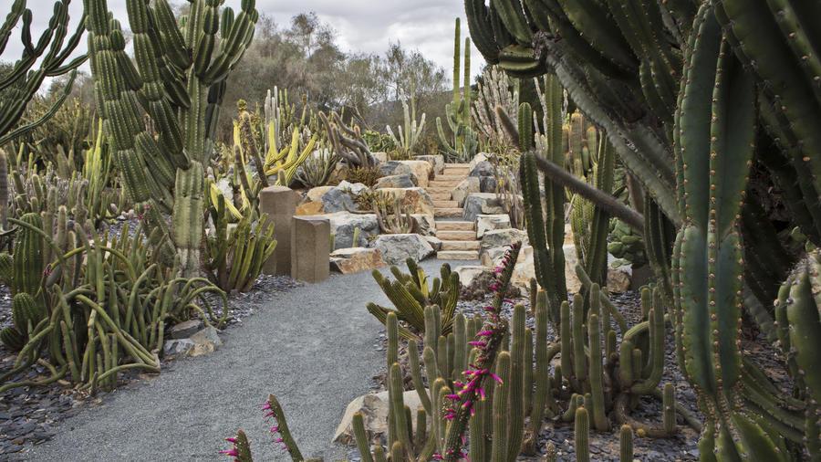 The Cactus Garden (Ganna Walska Lotusland)