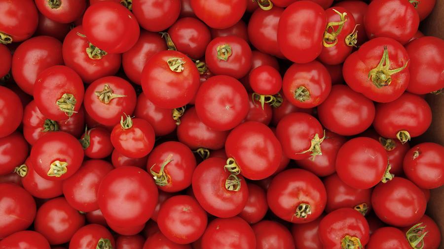 Best tomatoes in the West-Dirty Girl Farms; Aug'12; Tomato farmer, Joe Schirmer
