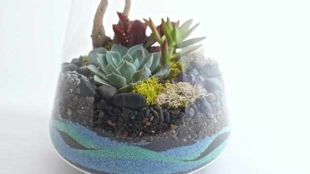 Sand Terrarium by Potted