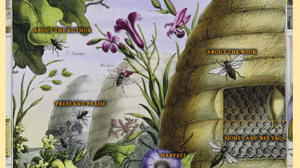 Bee books for those charmed by bees