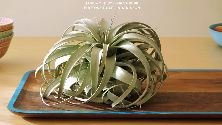 6 simple tricks to keep your air plant alive sunset magazine. Black Bedroom Furniture Sets. Home Design Ideas