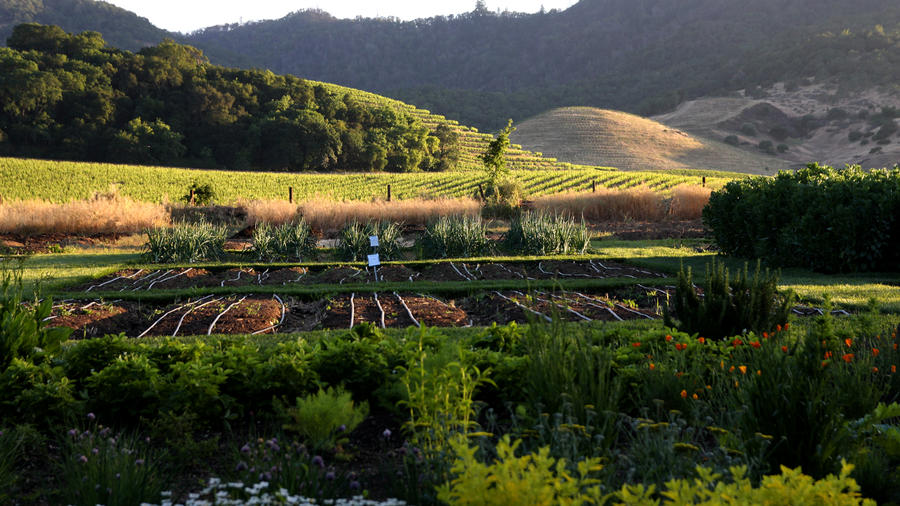 Where To Go This Weekend: Napa Valley, CA