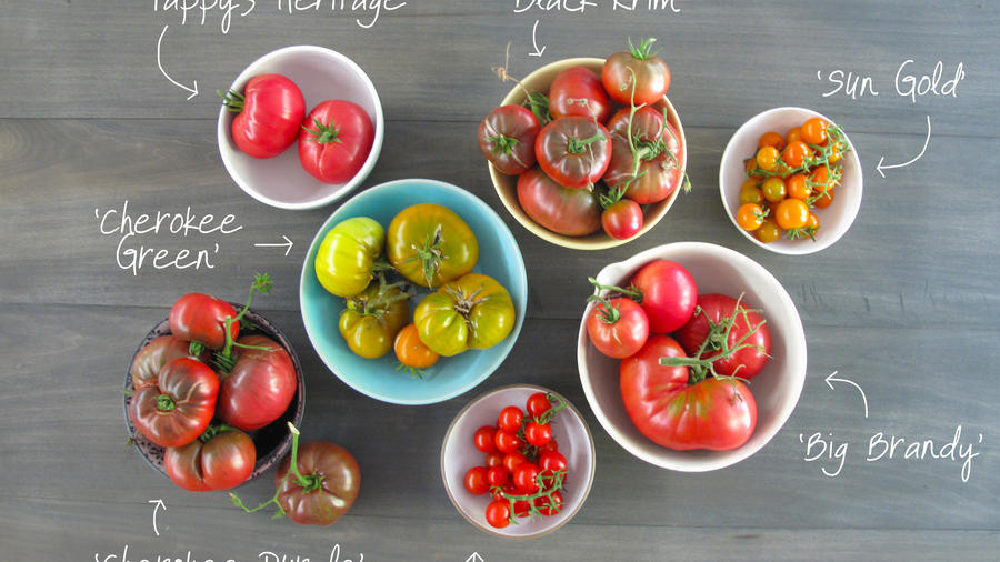 The Best Tomatoes from Sunset's Test Garden