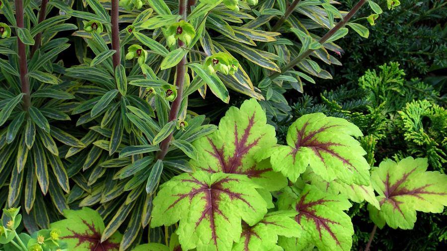 Planting Ideas: Orchestral Movement in the Key of Lime