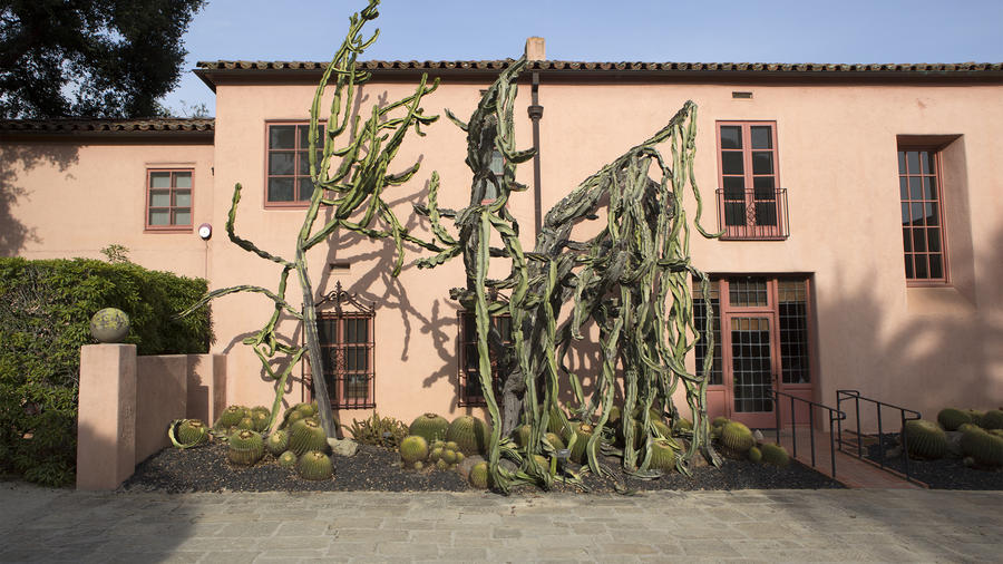 The weeping Euphorbia in front of Madame's home. (Ganna Walska Lotusland)