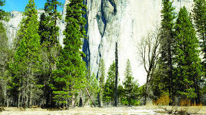 Child contracts plague from camping in Yosemite National Park