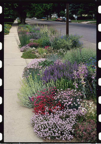 Turn That Space By The Curb Into A Spot Of Beauty That Needs Little Care    Sunset Magazine