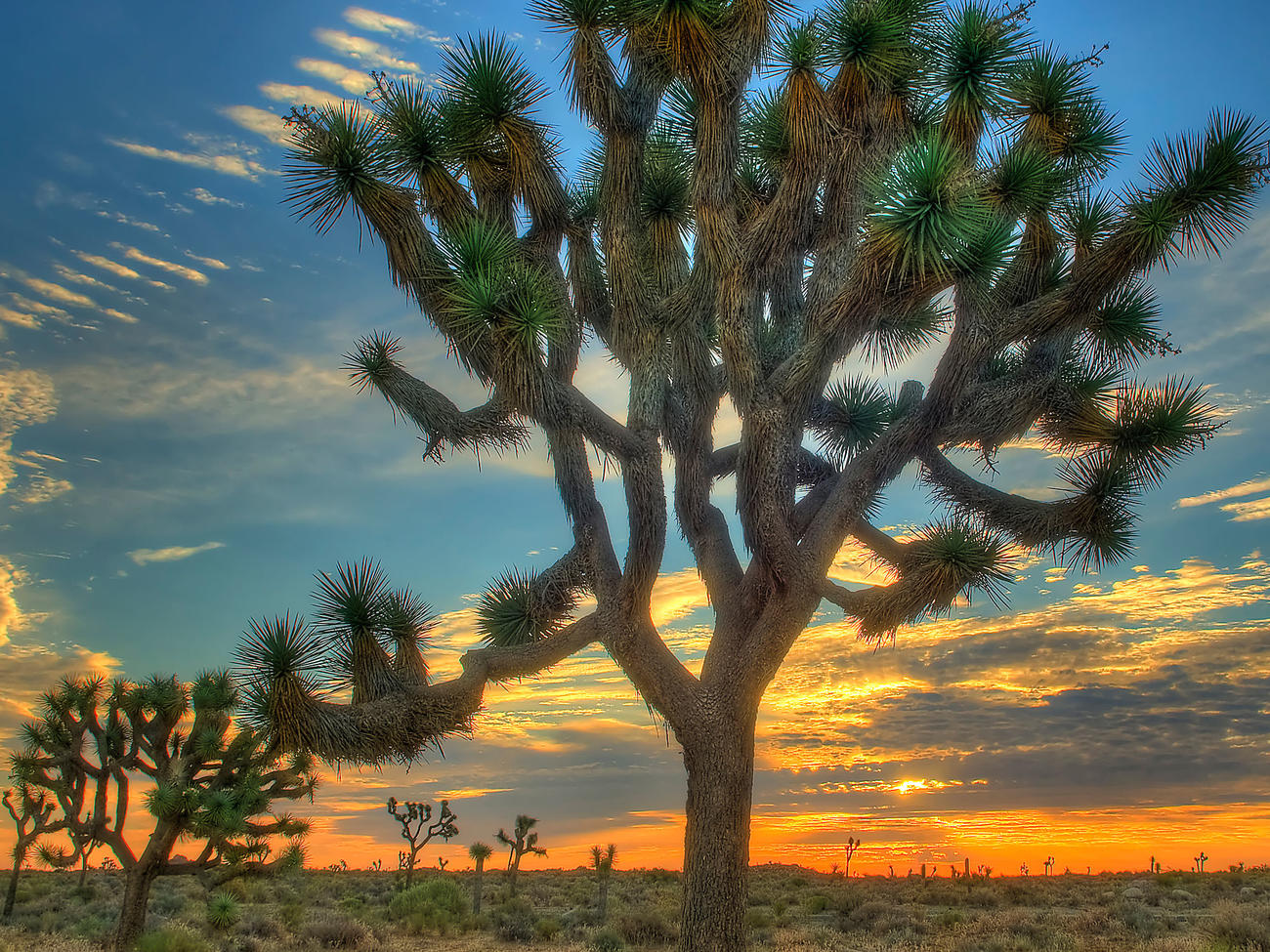 Top Wow Spots of Joshua Tree National Park
