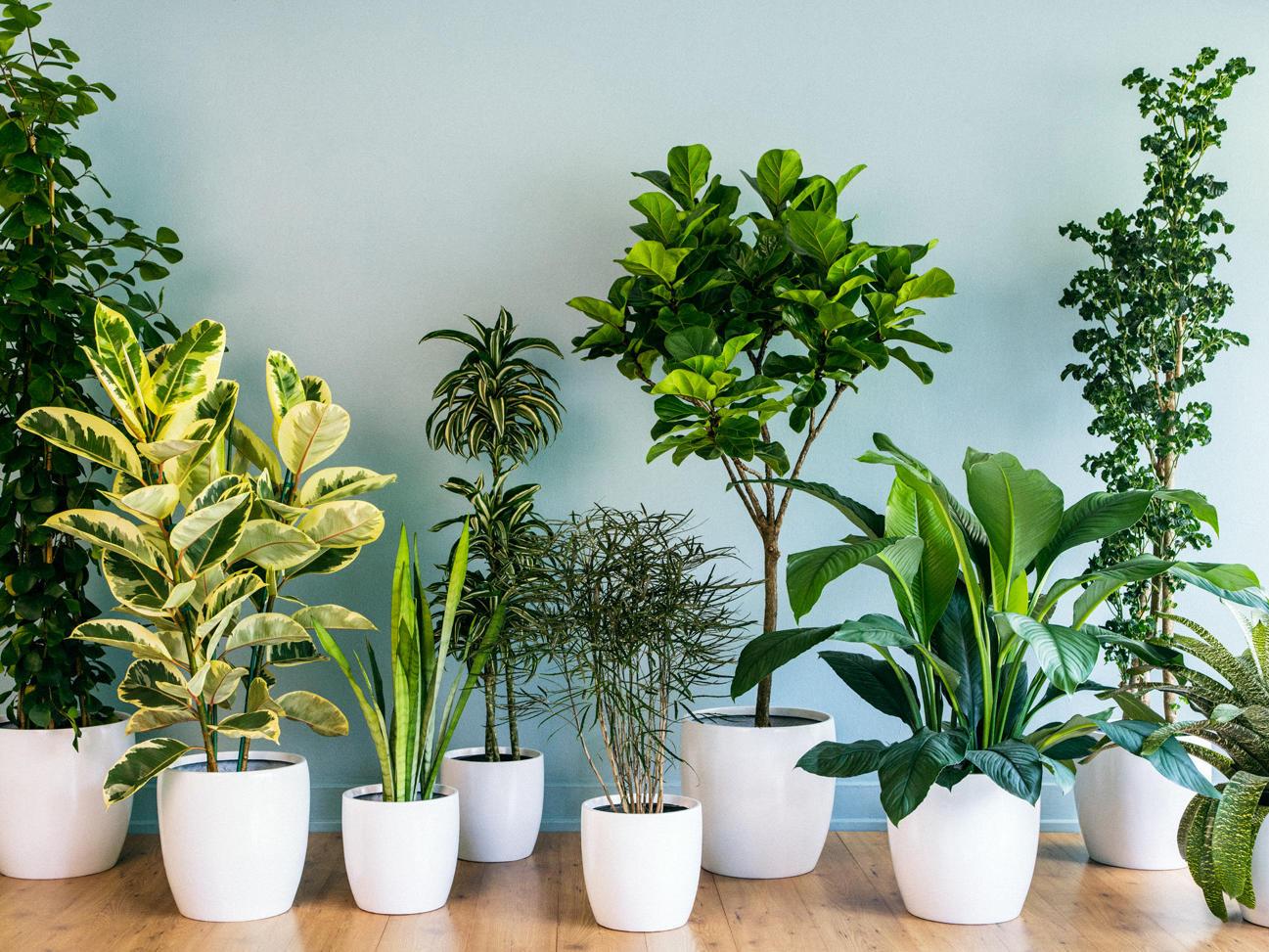9 Super Chic Houseplants