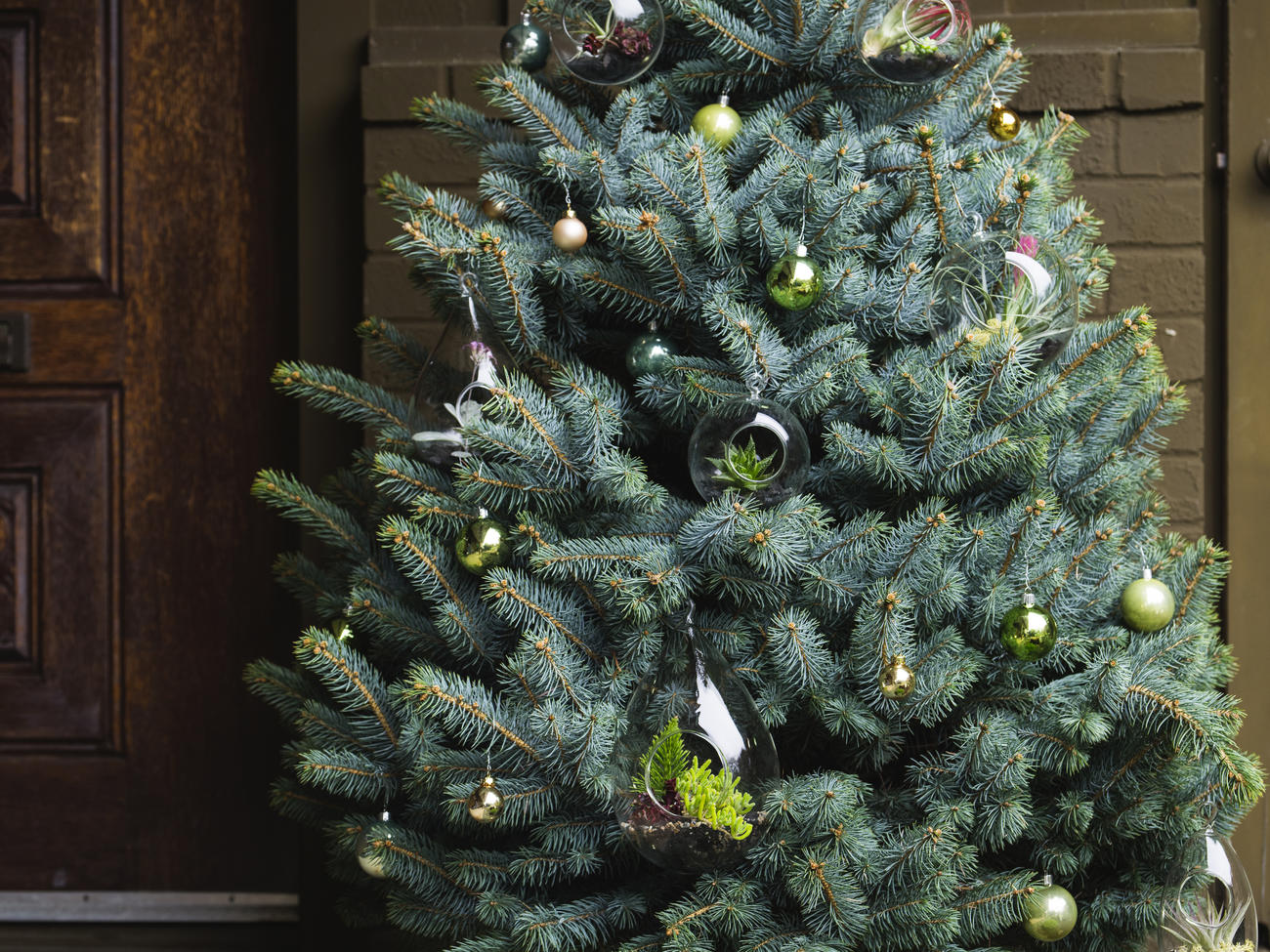 11 Sustainable Christmas Tree Choices