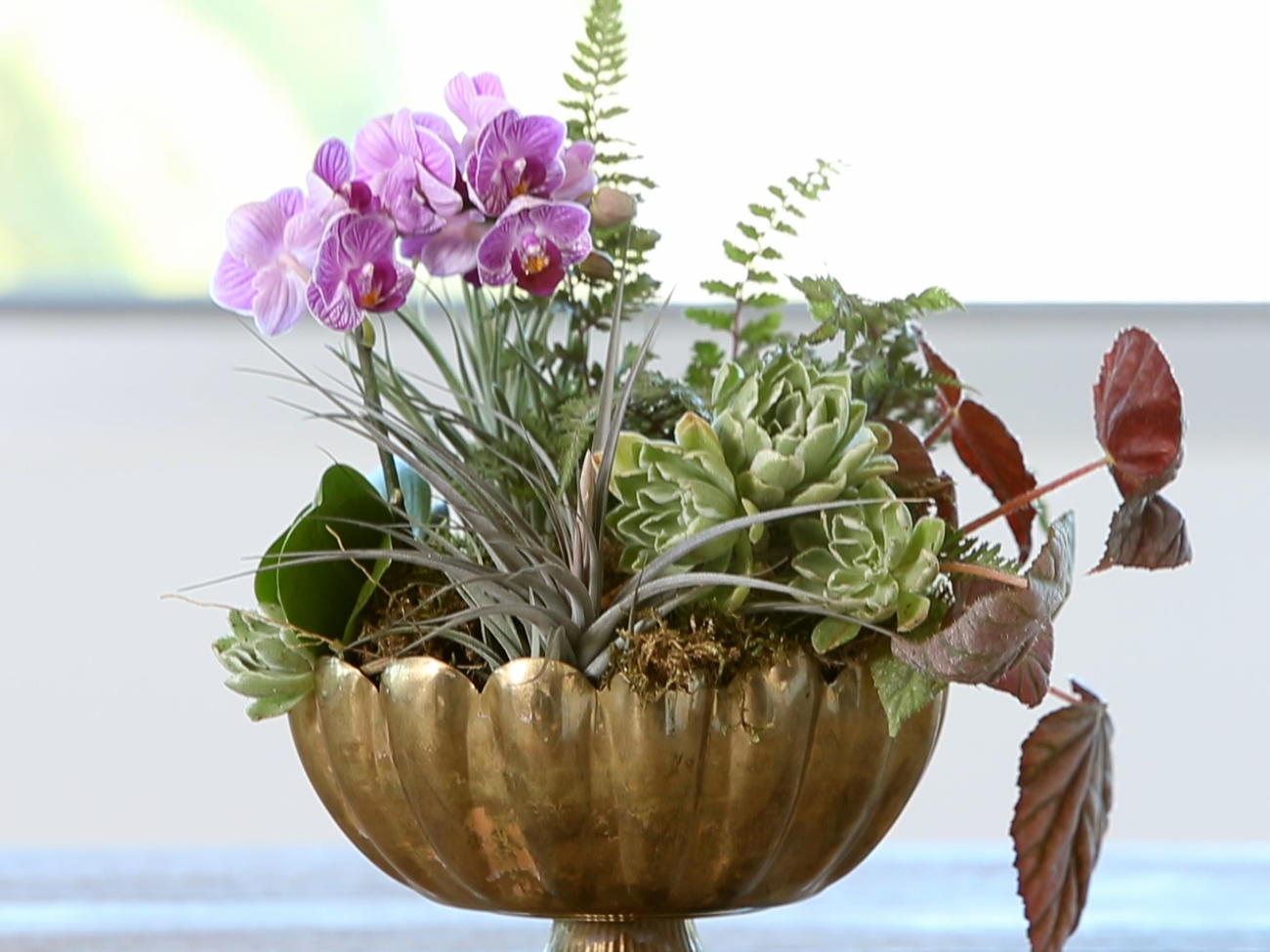 Ultimate Guide to Indoor Plants - Sunset Magazine