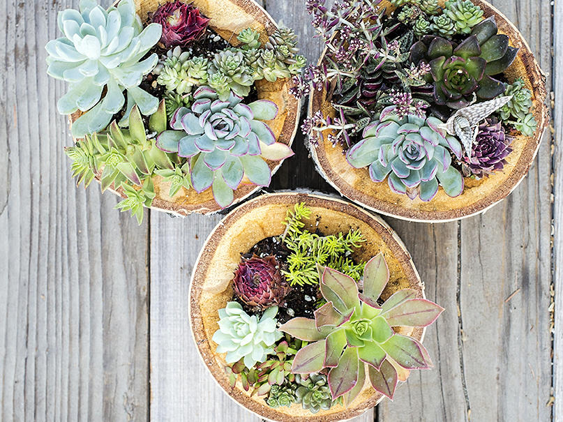 8 Foolproof Ways To Keep Your Succulents Alive Sunset Magazine