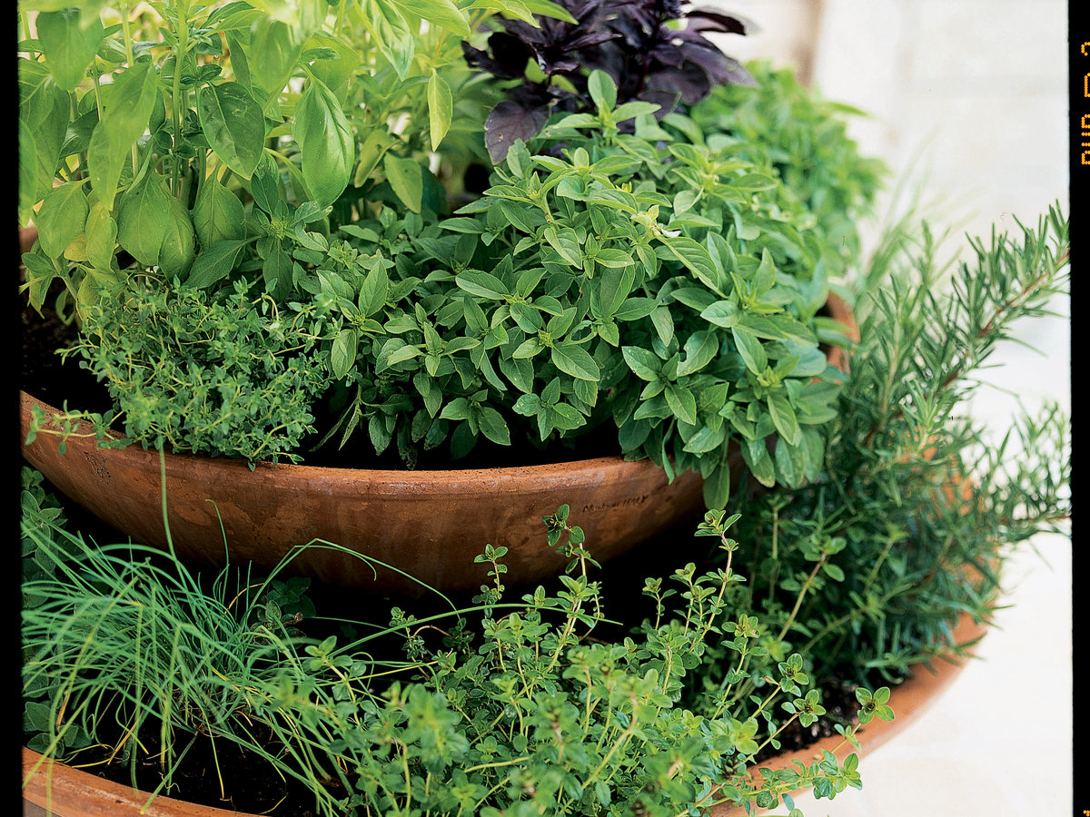 Home-grown herb container garden