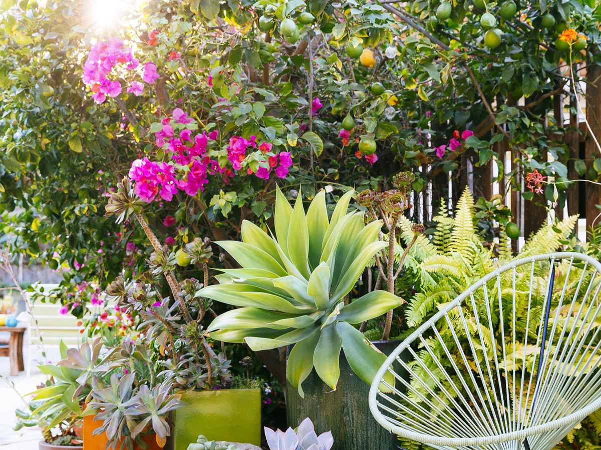 Garden Landscaping And Design Ideas Sunset Magazine