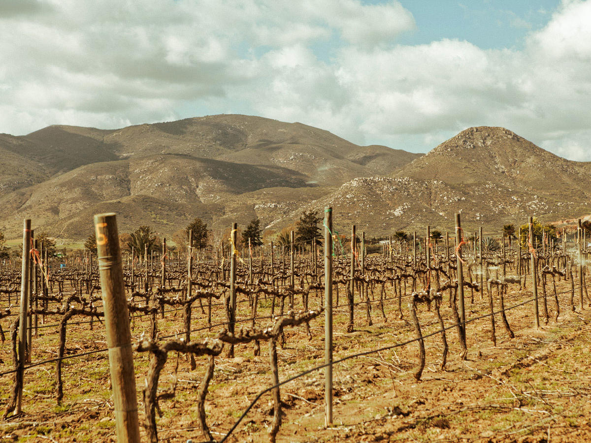 Explore valle de guadalupe wine country sunset magazine for Country living magazine customer service
