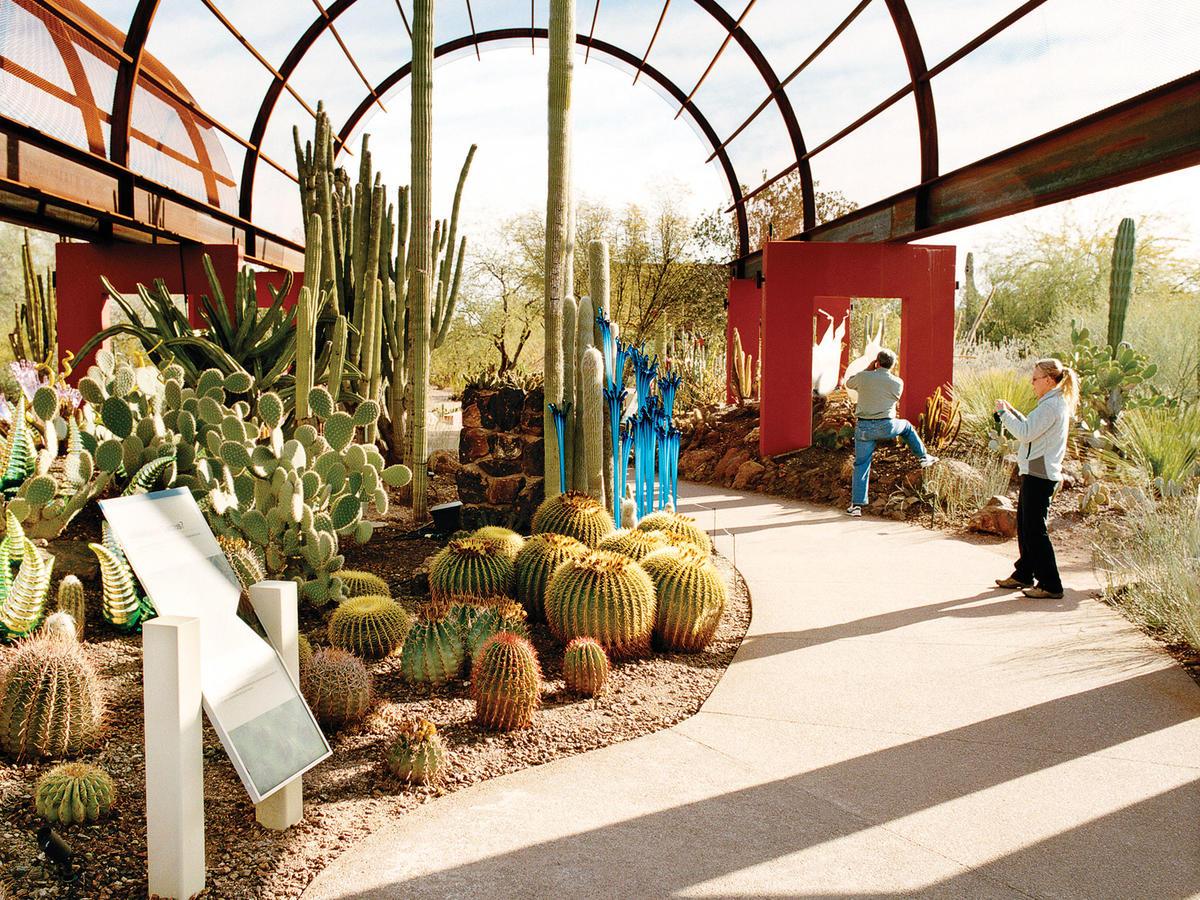 phoenix s cutting edge gardens sunset magazine. Black Bedroom Furniture Sets. Home Design Ideas