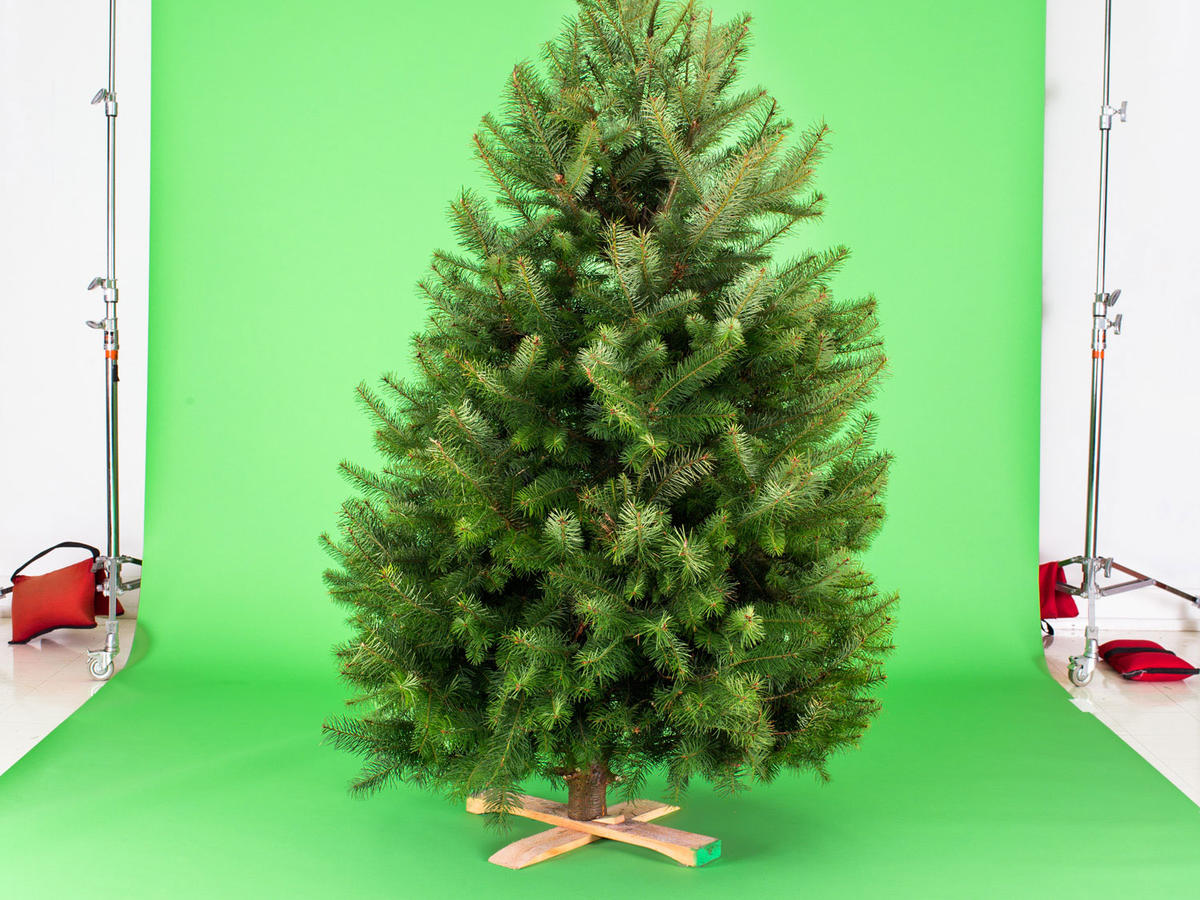 Fake Christmas Tree Choosing The Right One For You Sunset Magazine