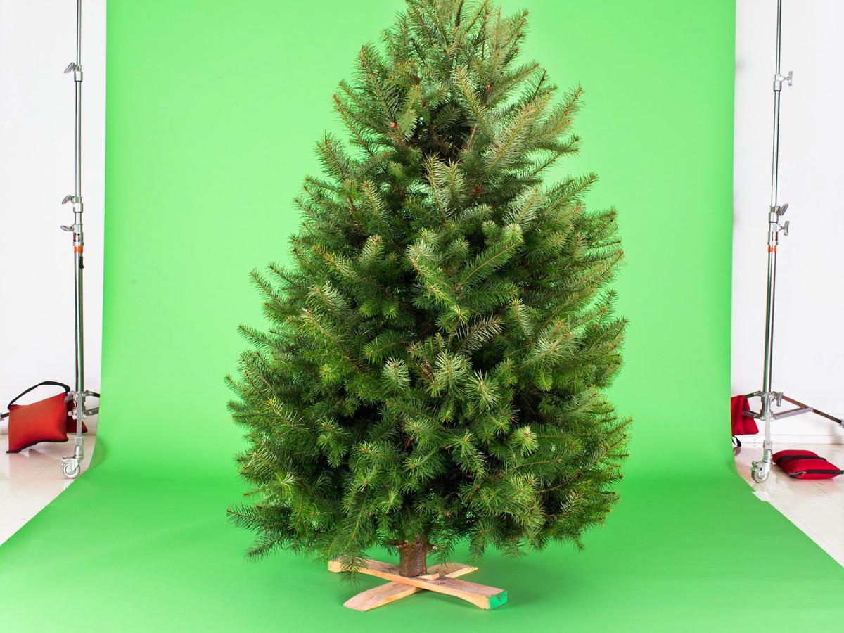Fresh Vs Fake Christmas Tree Choosing The Right One For You