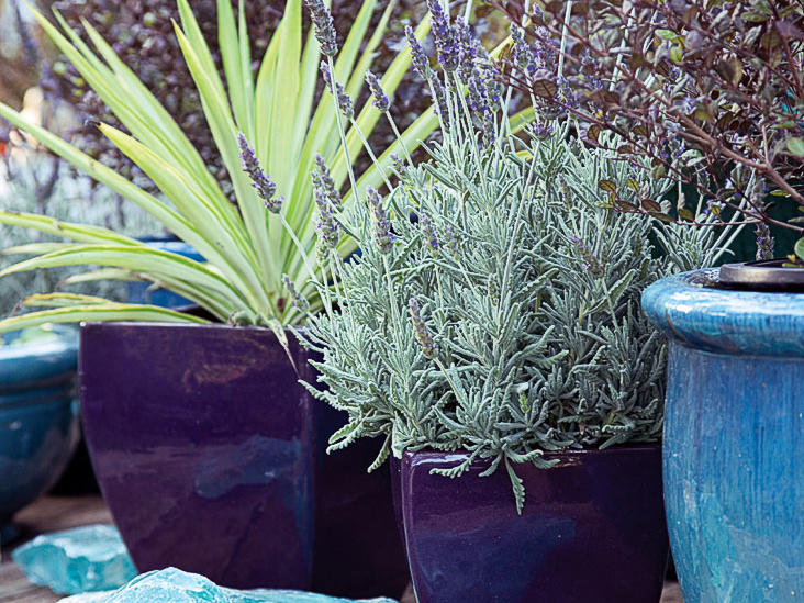 Water Wise Container Plants That Look Good Do The Most