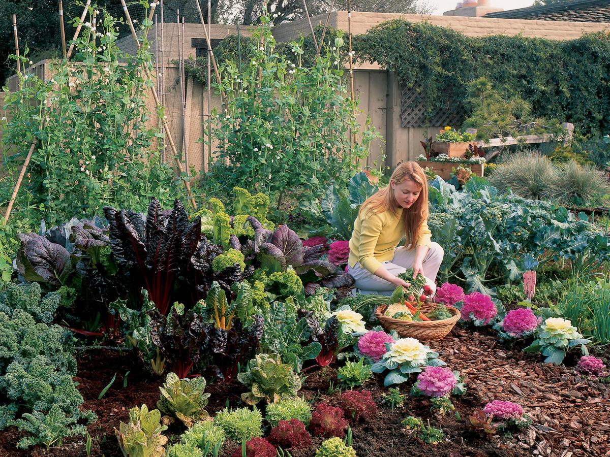 Free plan your cool season vegetable garden sunset magazine for Kitchen garden